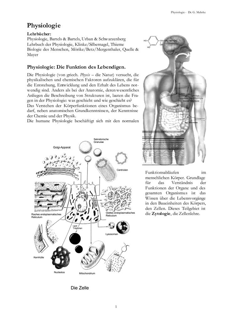 Nett Grundlagen Der Menschlichen Anatomie Und Physiologie Lehrbuch ...
