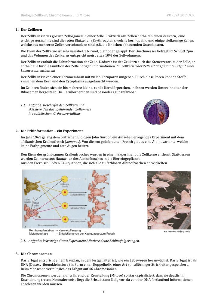 Biologie Zellkern, Chromosomen und Mitose VORSSA 2009/CK 1