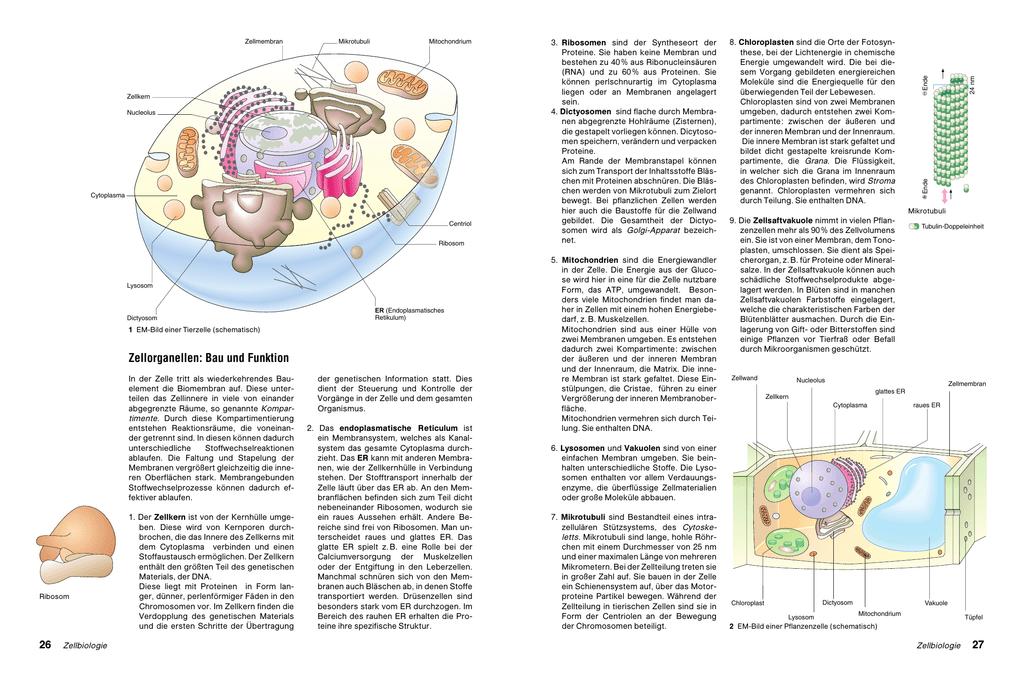 Zellorganellen: Bau und Funktion