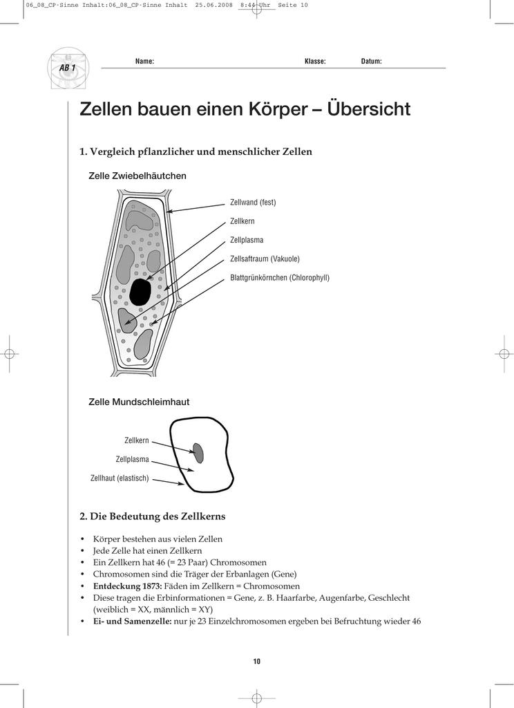 Beste Anatomie Der Menschlichen Zelle Bilder - Menschliche Anatomie ...