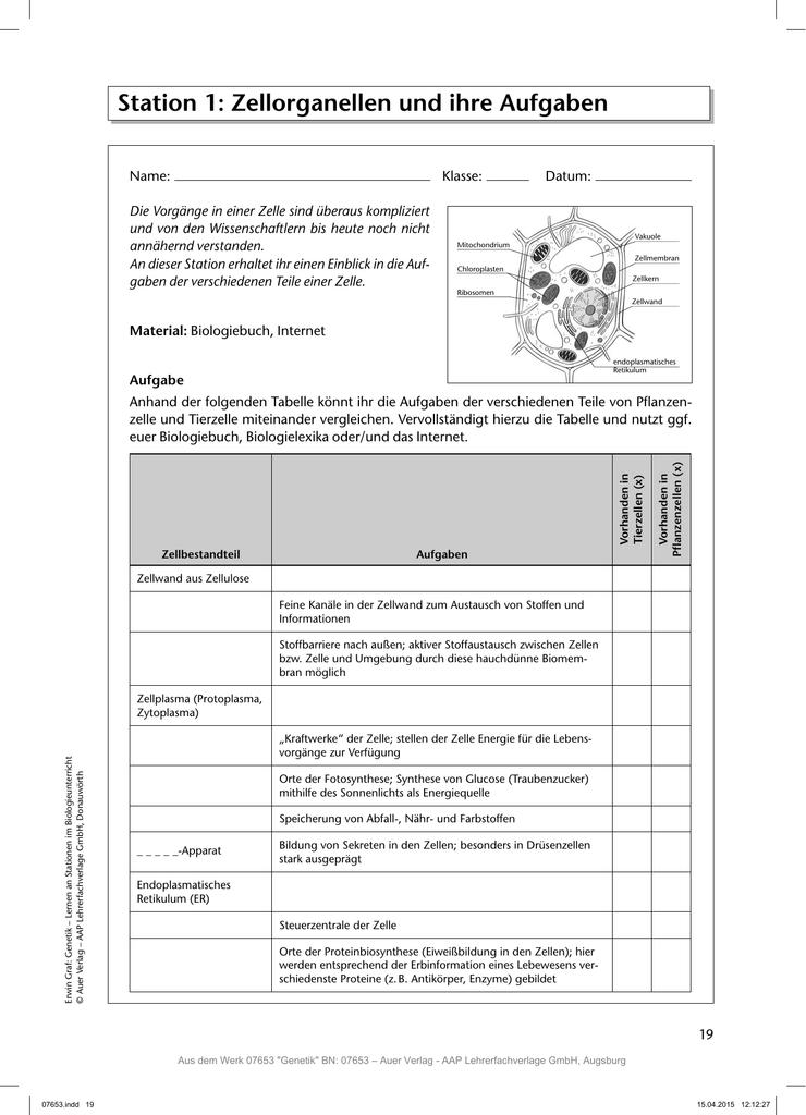 Station 1: Zellorganellen und ihre Aufgaben