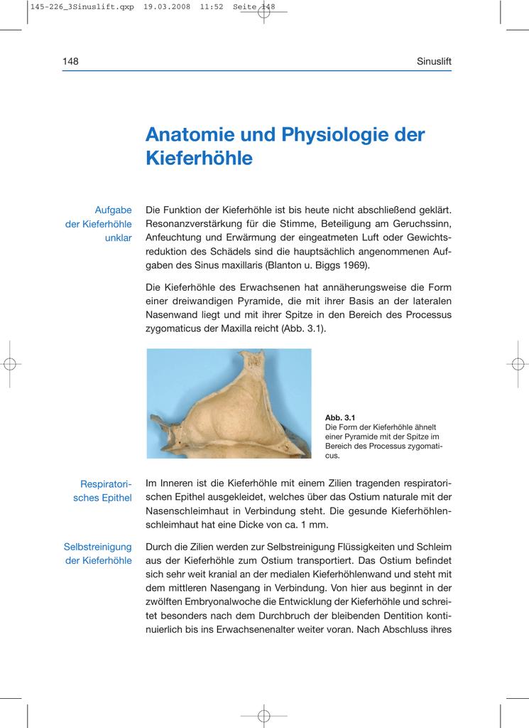 Anatomie und Physiologie der Kieferhöhle