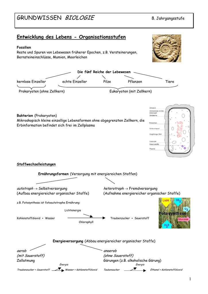 Kennzeichen des Lebens - Bodensee
