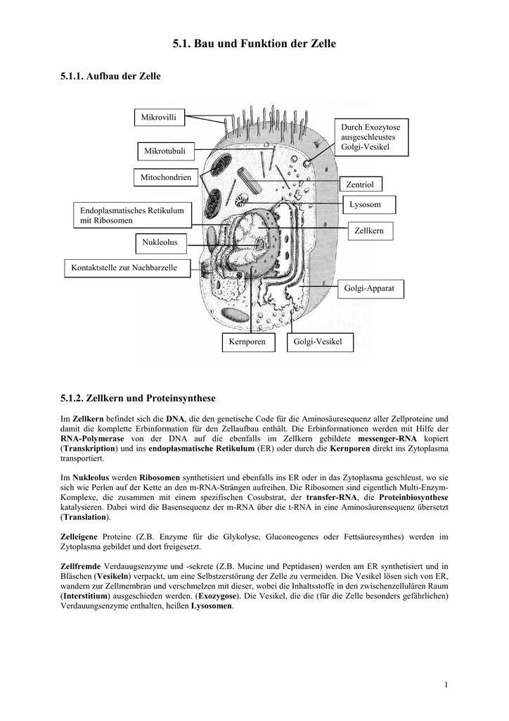 5.1. Bau und Funktion der Zelle - Poenitz