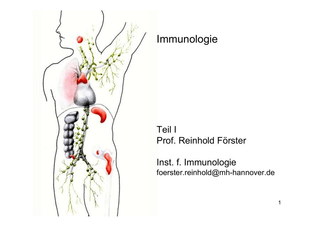 Nett Krebse Innere Anatomie Diagramm Fotos - Anatomie Von ...