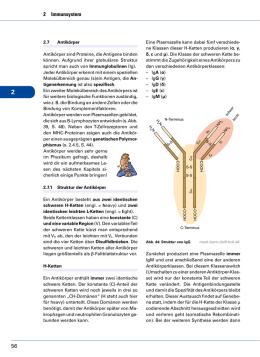 lymphzellen im tumorgewebe