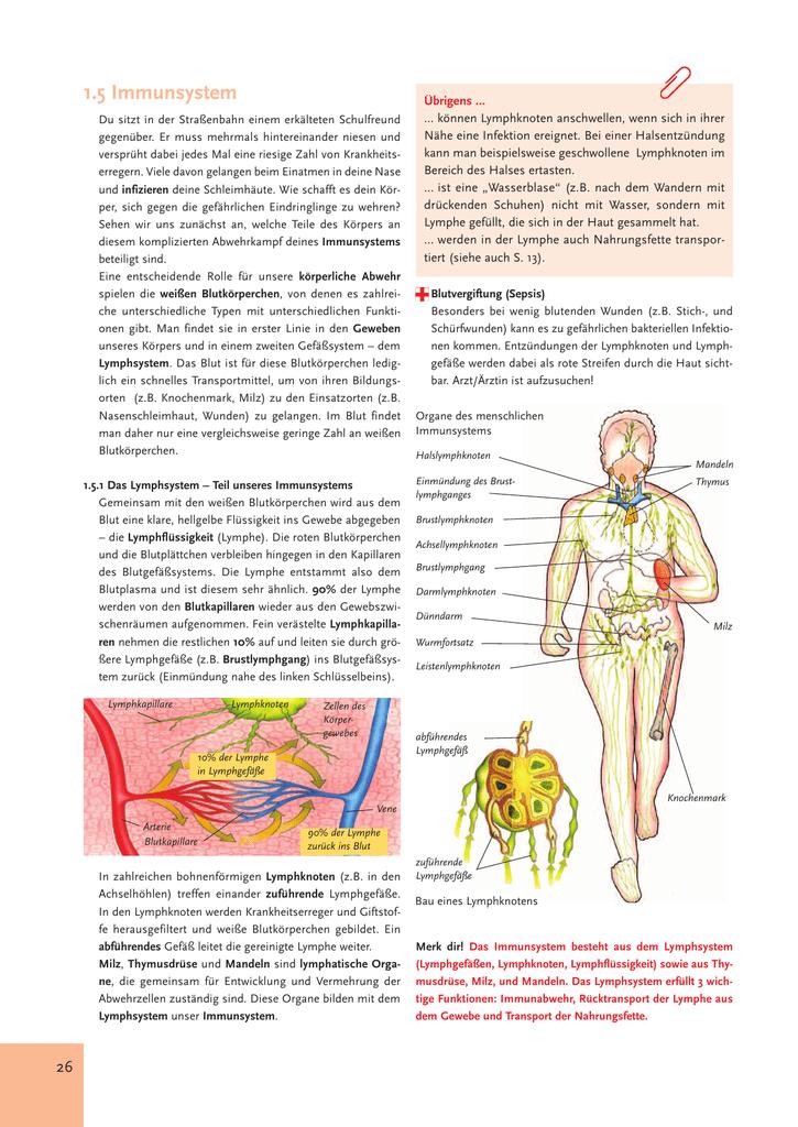 Beste Diagramm Der Lymphknoten Zeitgenössisch - Menschliche Anatomie ...
