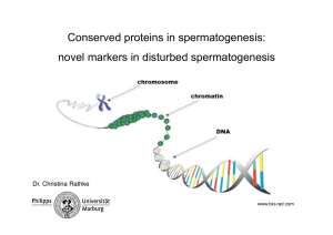 Conserved proteins in spermatogenesis: novel markers in disturbed