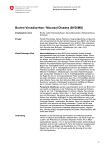 Bovine Virusdiarrhoe / Mucosal Disease (BVD/MD)