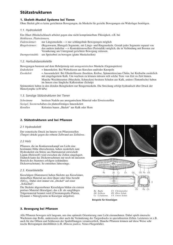 Wunderbar Funktionen Des Muskelsystems Bilder - Anatomie und ...