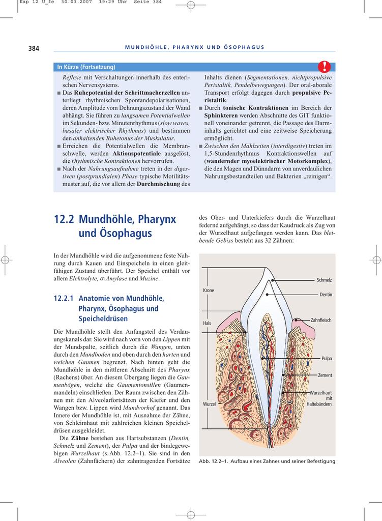 12.2 Mundhöhle, Pharynx und Ösophagus