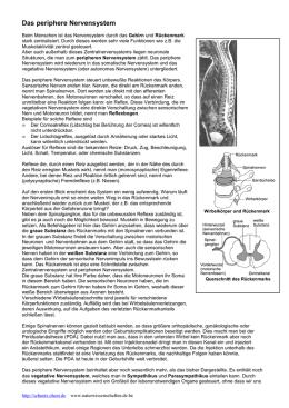 peripheres nervensystem beruhigen