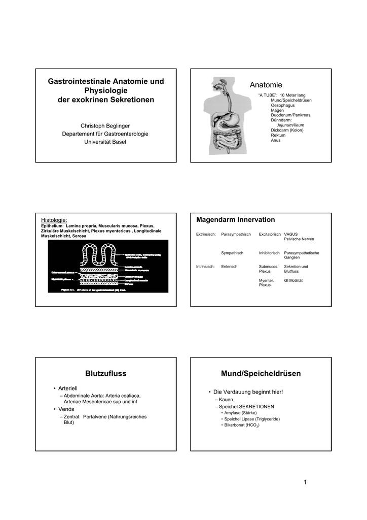 Anatomie und Physiologie der exokrinen Sekretion
