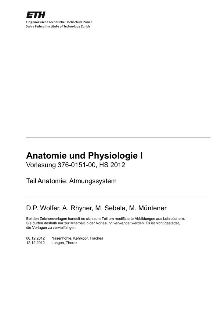 Schön Definieren Distal In Der Anatomie Zeitgenössisch - Menschliche ...
