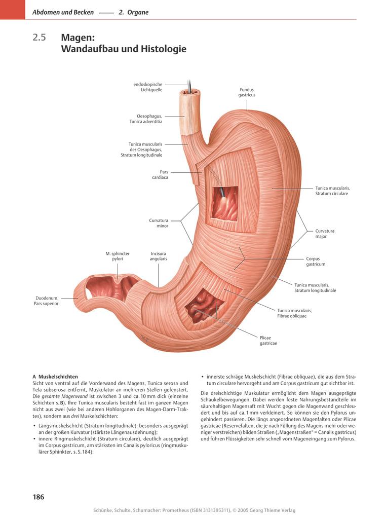 2.5 Magen: Wandaufbau und Histologie - beck