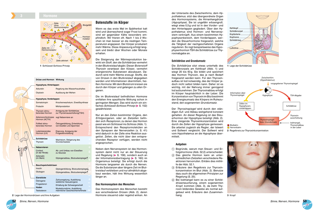 Botenstoffe im Körper 3 Hormone