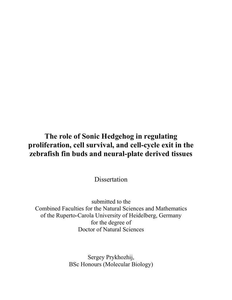 hhn thesis anmeldung