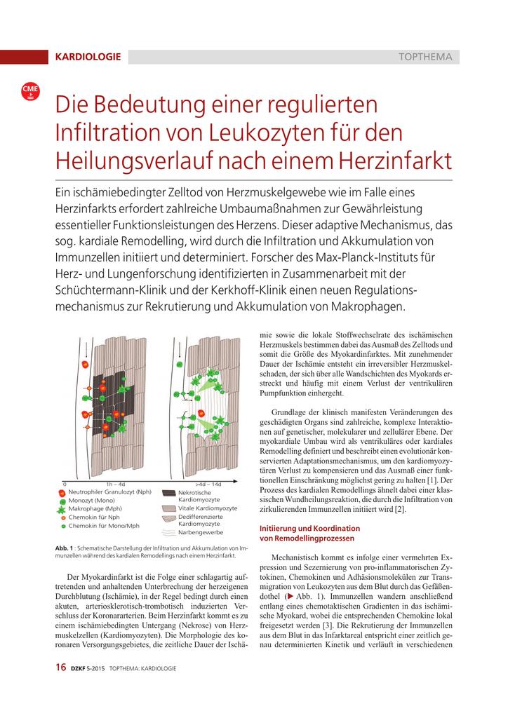 Fein Herzmuskelgewebe Funktion Fotos - Anatomie Ideen - finotti.info