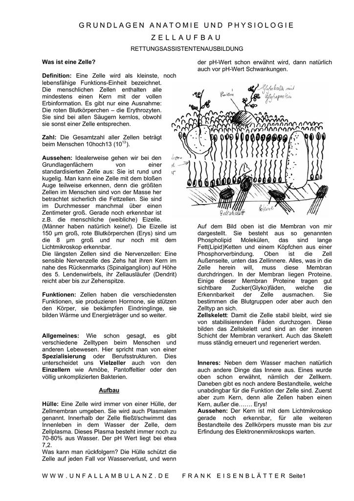 grundlagen anatomie und physiologie zellaufbau