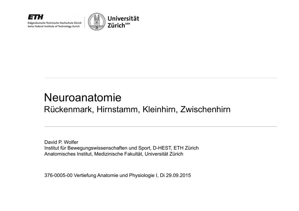 Großartig Anatomie Und Physiologie Des Hirnstammes Zeitgenössisch ...