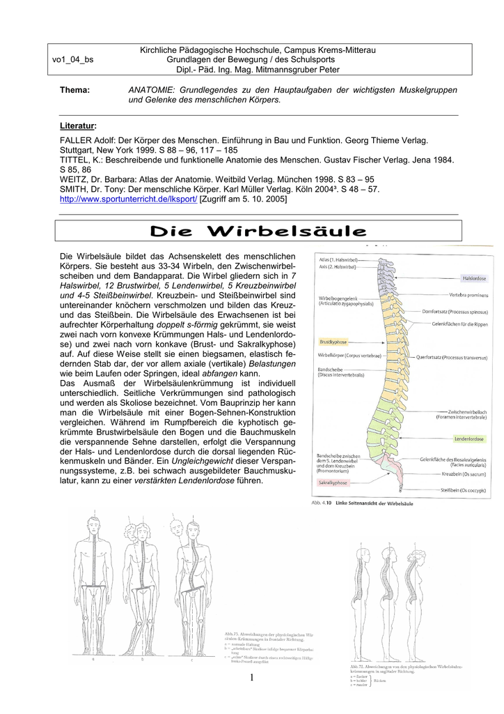 Anatomie Muskel und Gelenke