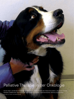 Palliative Therapie in der Onkologie