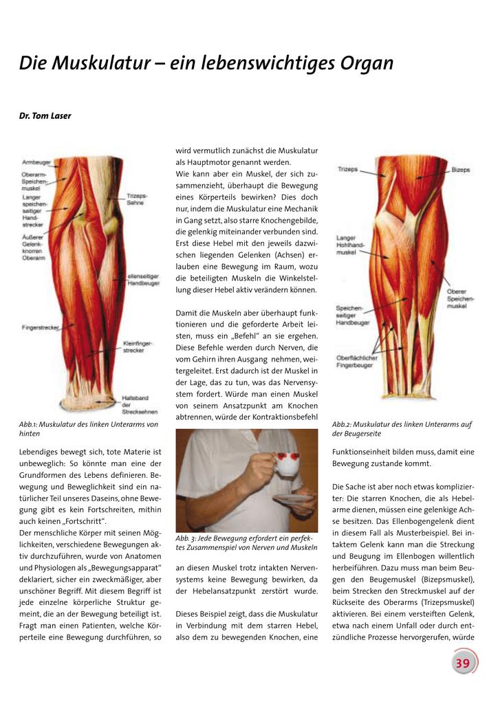 Die Muskulatur – ein lebenswichtiges Organ