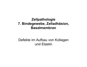 Zellpathologie 7. Bindegewebe, Zelladhäsion, Basalmembran