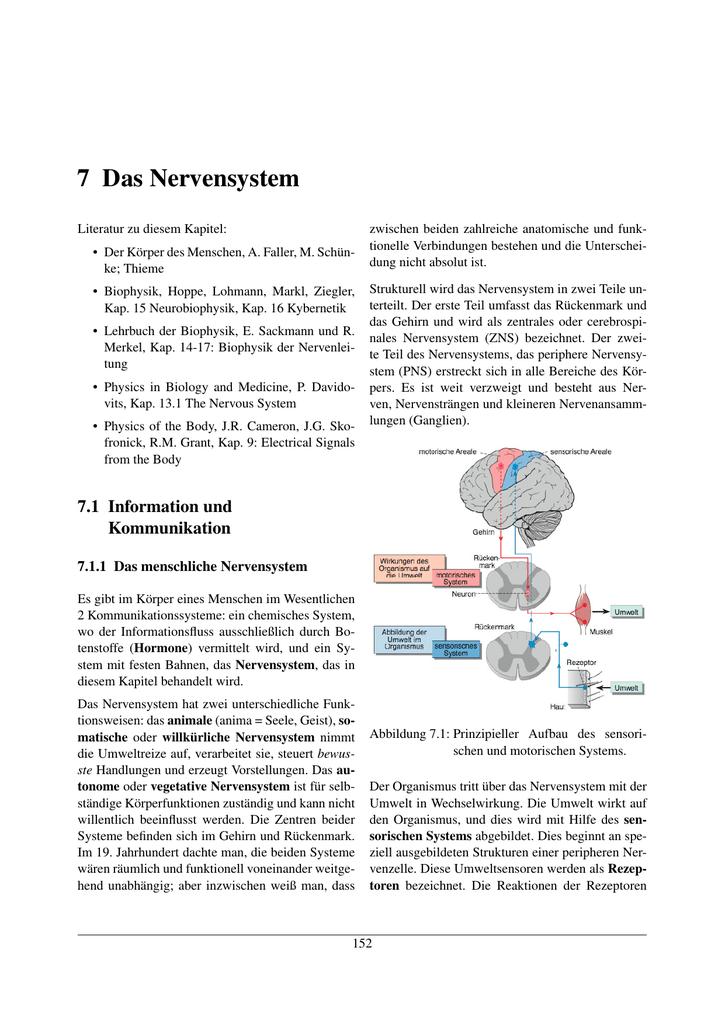 7 Das Nervensystem