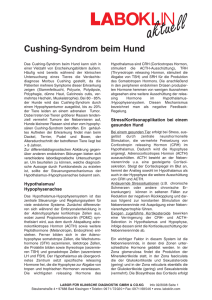 Cushing-Syndrom beim Hund