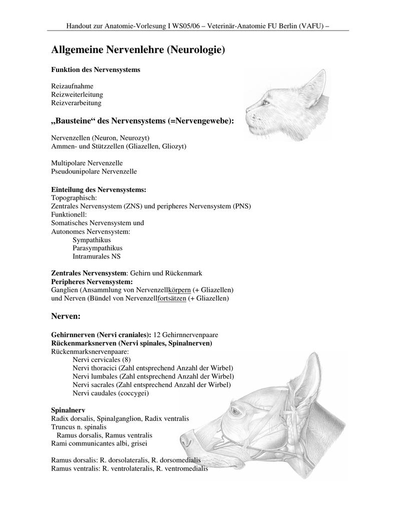 Allgemeine Nervenlehre (Neurologie)
