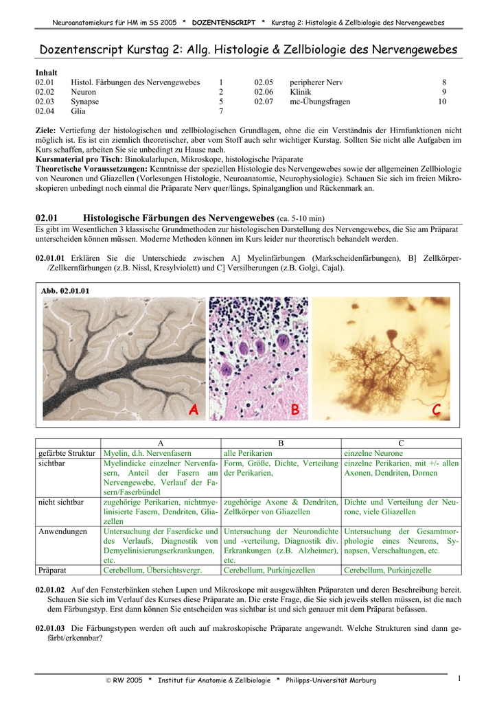 Übersicht über das Nervensystem