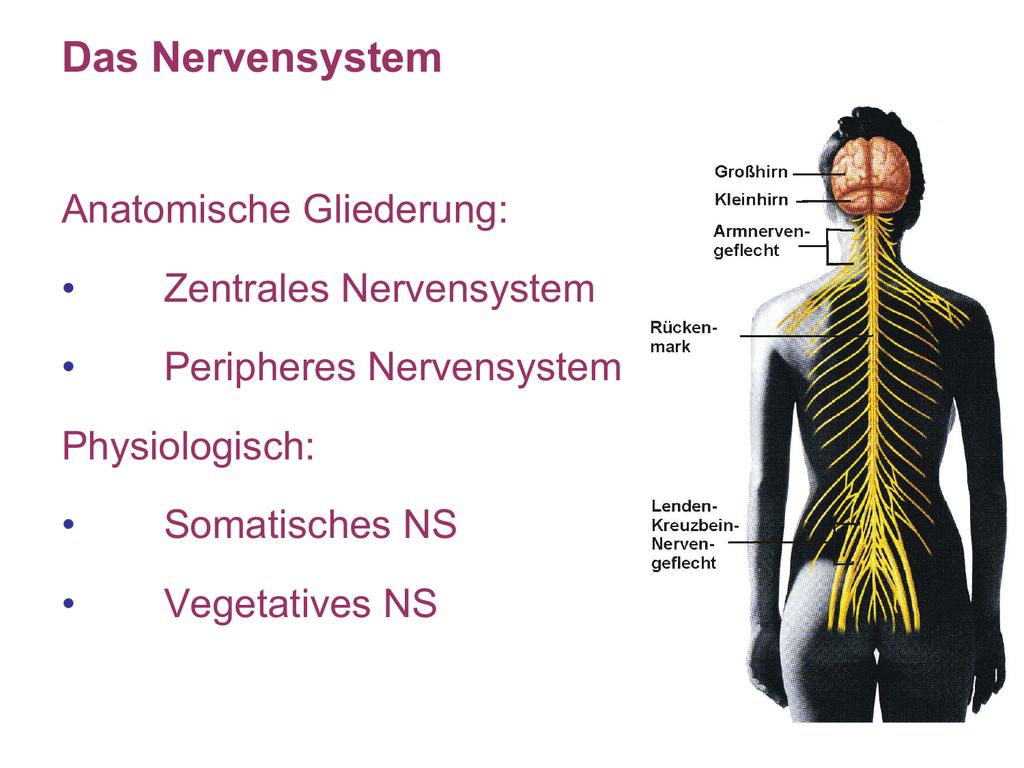 ZNS - mehrke.de