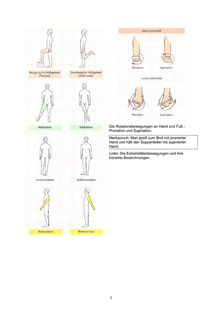 Gliederung der Anatomie nach Körperteilen und Organsystemen