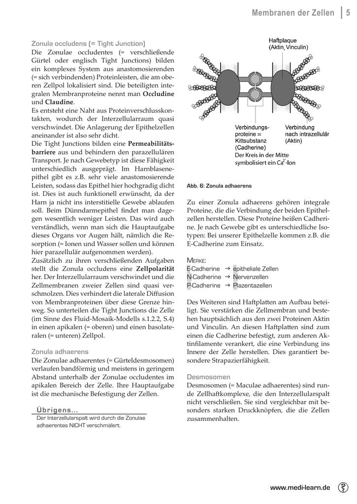 Membranen Der Zellen 5 Medi