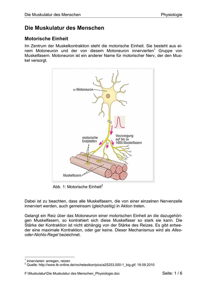 Charmant Membran Kontraktion Bilder - Menschliche Anatomie Bilder ...