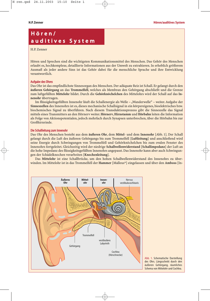 Hören/ auditives System