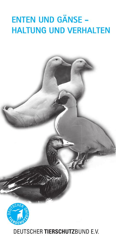 new product 4e628 d1008 Enten und Gänse - Haltung und Verhalten