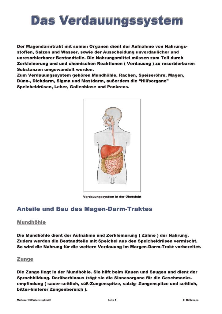 Erfreut Anatomie Der Speiseröhre Und Des Magens Ideen - Menschliche ...