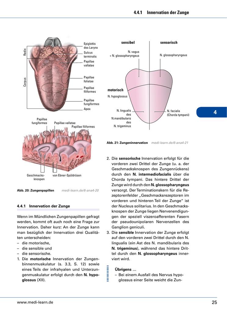 Gemütlich Zunge Diagramm Fotos - Menschliche Anatomie Bilder ...