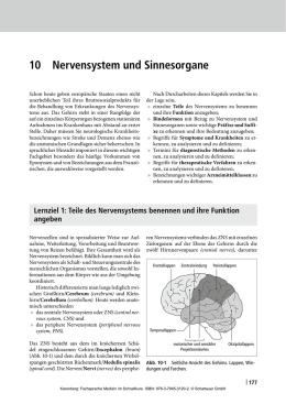 peripheres nervensystem erklärung