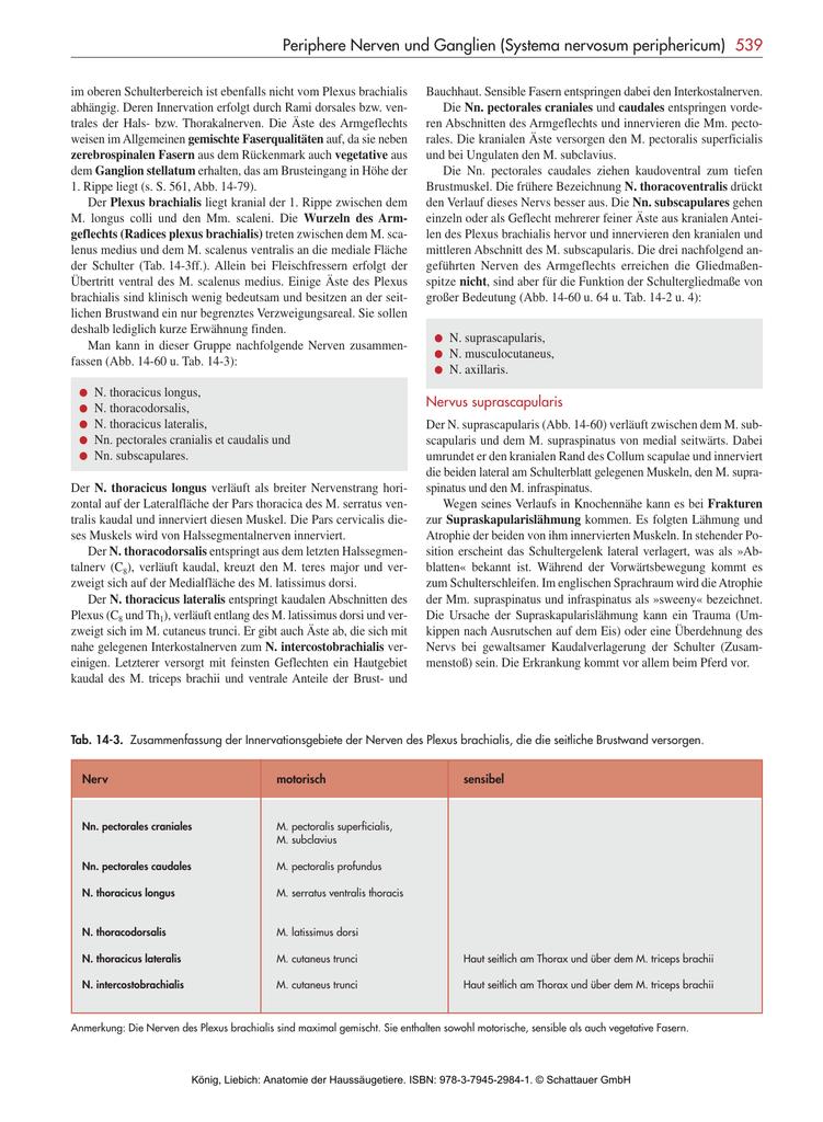 Periphere Nerven und Ganglien (Systema nervosum periphericum
