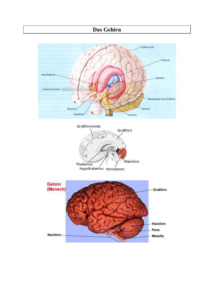Das Gehirn - Sammlung