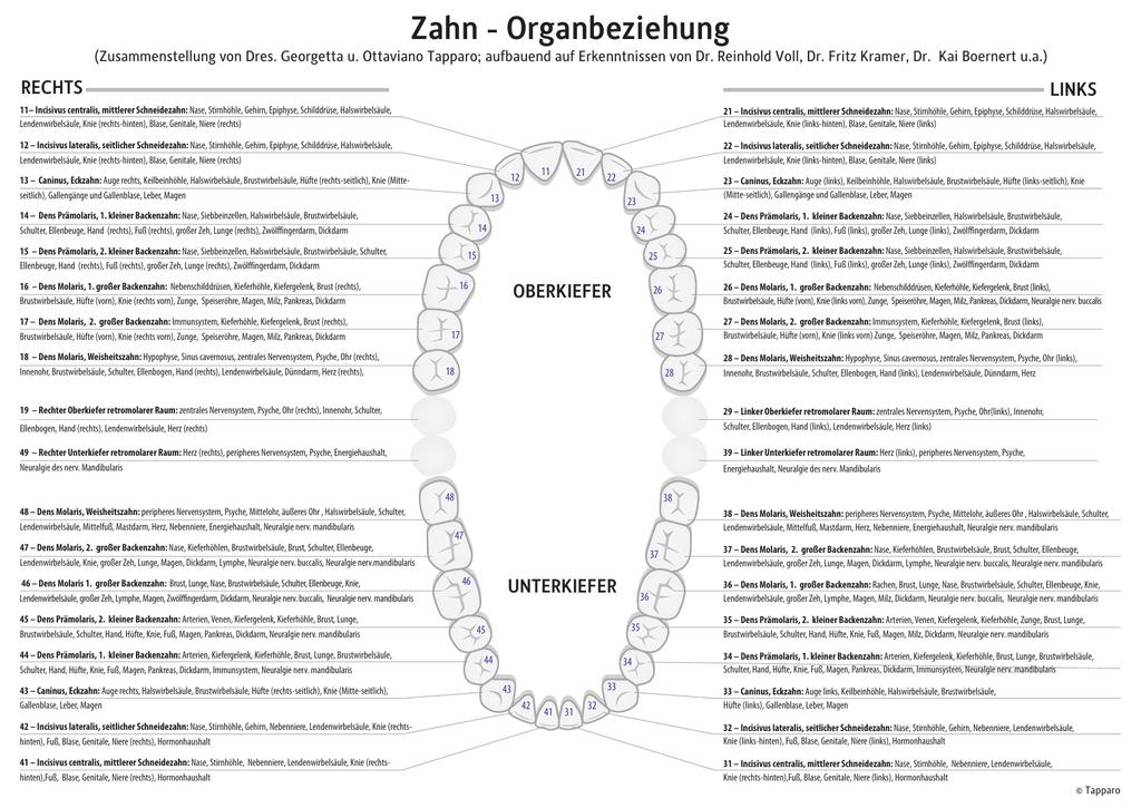 Wunderbar Pankreas Leber Und Gallenblase Zeitgenössisch - Anatomie ...