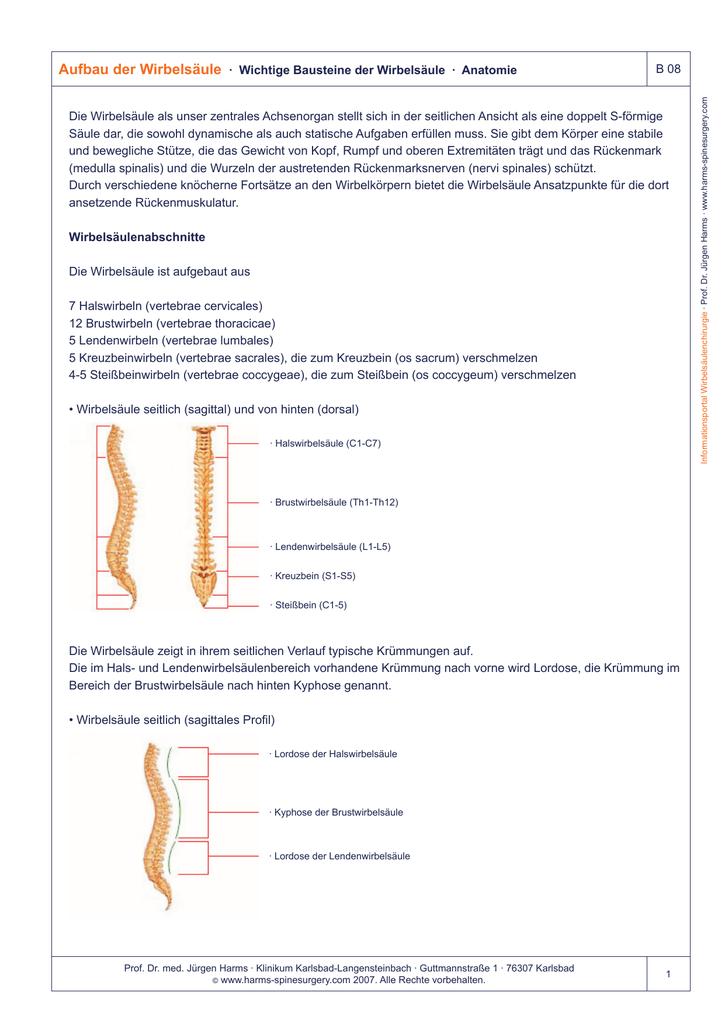 Aufbau der Wirbelsäule · Wichtige Bausteine der Wirbelsäule
