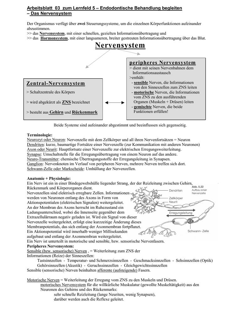 Niedlich Neurotransmitter Arbeitsblatt Bilder - Arbeitsblätter für ...