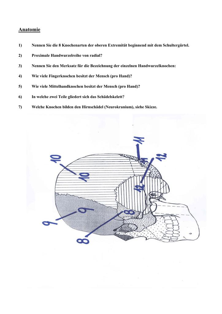 Wunderbar Obere Extremität Anatomie Wichtige Fragen Ideen - Anatomie ...