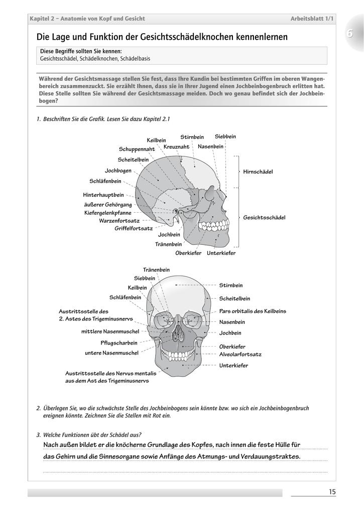 Die Lage und Funktion der Gesichtsschädelknochen kennenlernen