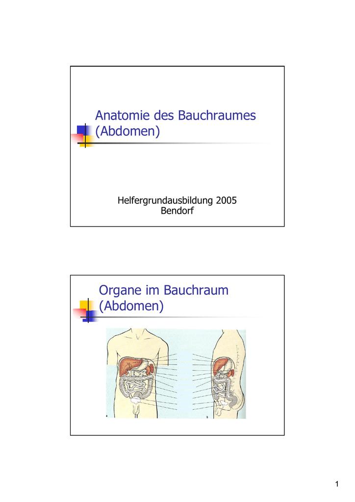Anatomie des Bauchraumes (Abdomen) Organe im Bauchraum