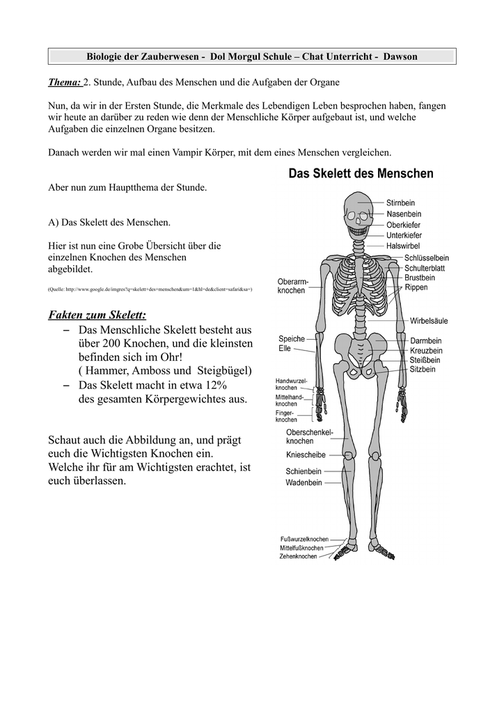 Fakten zum Skelett: – Das Menschliche Skelett besteht aus über 200